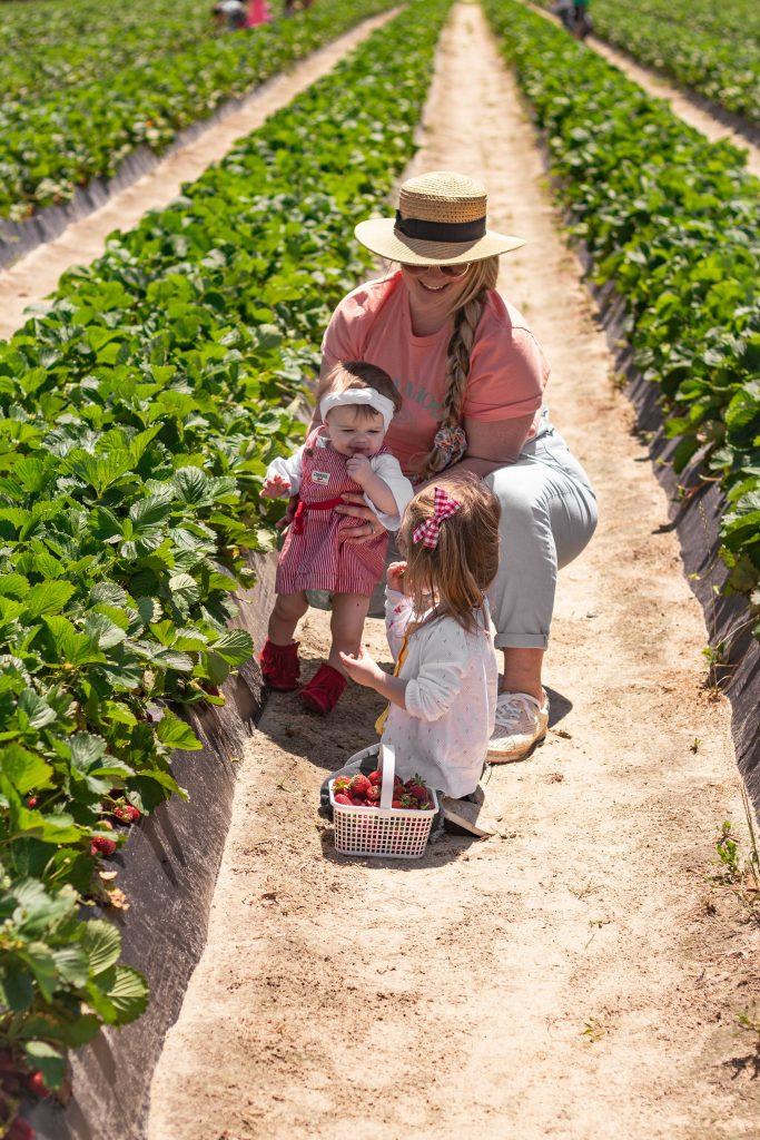 Spring Strawberry picking in Fayetteville North Carolina