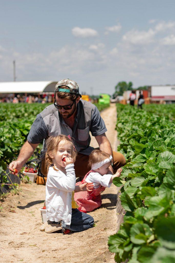 Caroline Odom finding the best strawberries at Gillis Hill Farm strawberry field