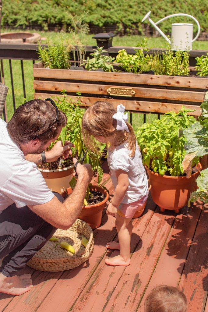 Vegetable Garden at Home with The Boho Diaries